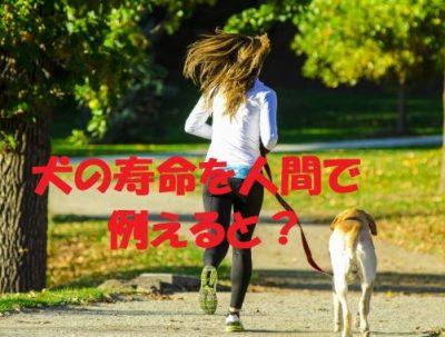 犬の寿命を人間で例えると?