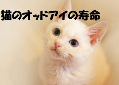猫のオッドアイの寿命