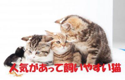 猫人気飼いやすい