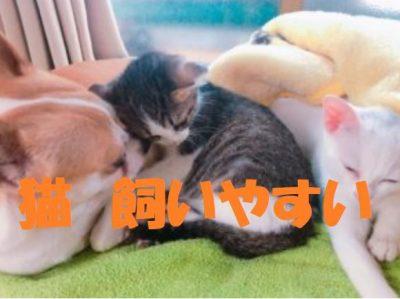 飼いやすい猫について