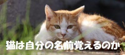 猫は自分の名前覚えるのか