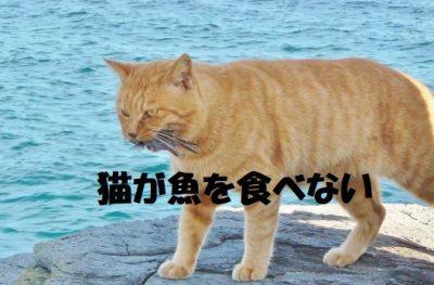 猫が魚を食べない