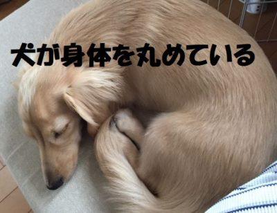 犬が身体を丸めている
