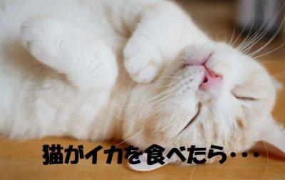 猫がイカを食べて腰を抜かす