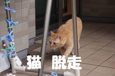 家猫脱走について