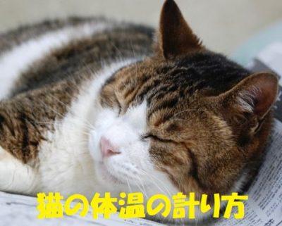 猫の体温の計り方