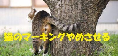 猫のマーキングやめさせる