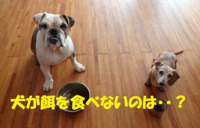 犬餌食べない