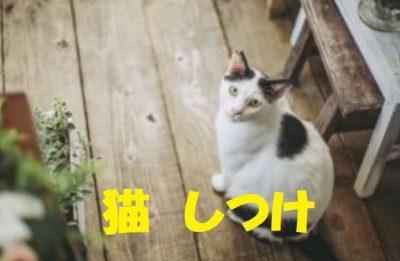 猫のしつけ方