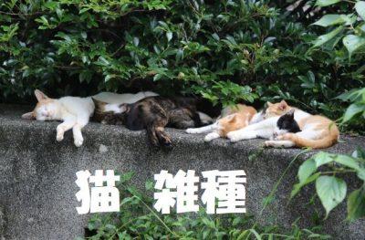 猫雑種に種類はあるのか