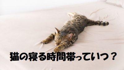 猫の寝る時間帯っていつ?