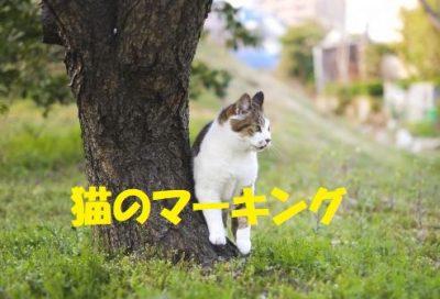 猫のマーキングはいつから