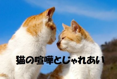 猫の喧嘩とじゃれあい