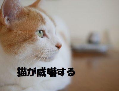 猫が威嚇する