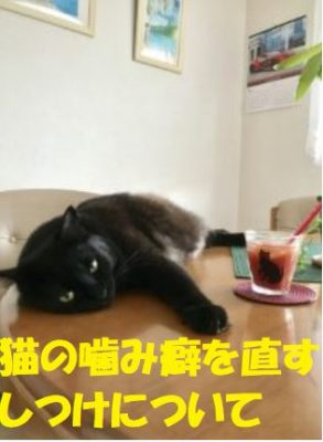 猫噛み癖を治す