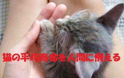 猫の平均寿命を人間に例える