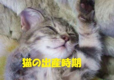 猫の出産時期