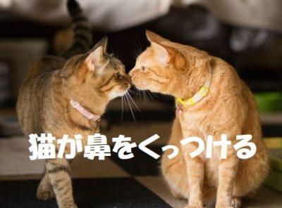 猫が鼻をくっつける