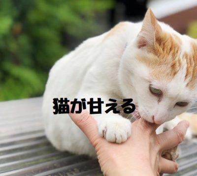 猫が甘える