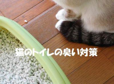 猫のトイレの臭い対策