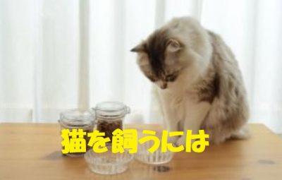 猫を飼うには
