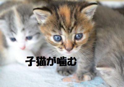 子猫が噛む