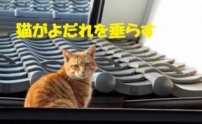 猫がよだれを垂らす