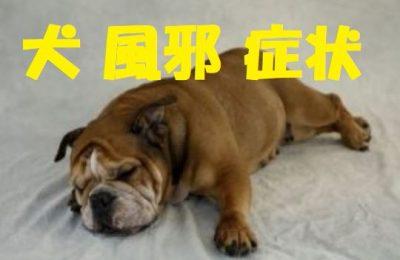 犬の風邪の症状
