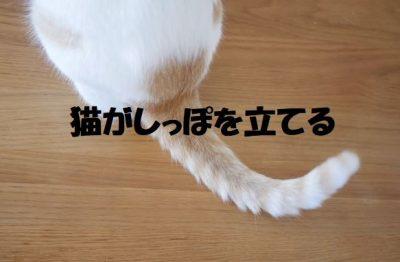 猫がしっぽを立てる
