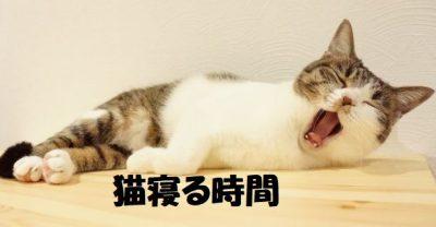 猫寝る時間