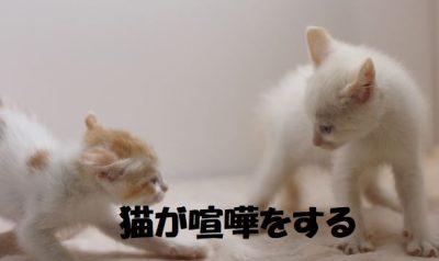 猫が喧嘩をする