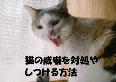 猫の威嚇を対処やしつける方法