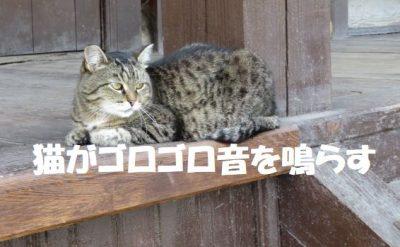 猫がゴロゴロ音を鳴らす