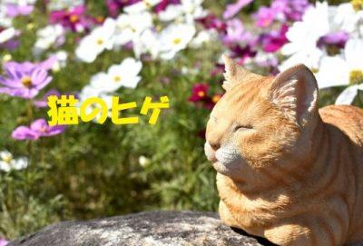 猫のヒゲ役割