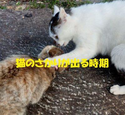 猫のさかりが出る時期