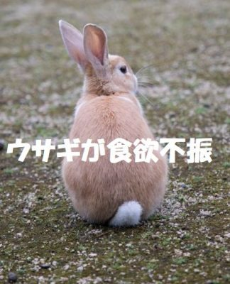 ウサギが食欲不振