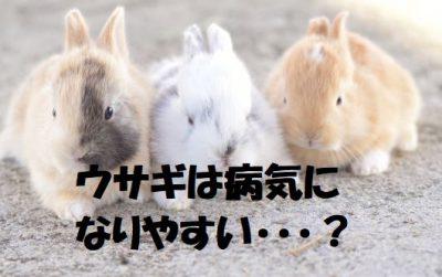 ウサギは病気になりやすい