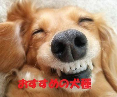 一人暮らしで犬を飼うならおすすめの犬種