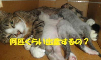 猫って何匹くらい出産するの?
