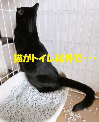 猫がトイレ以外で排便・尿をする