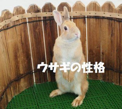 ウサギの性格