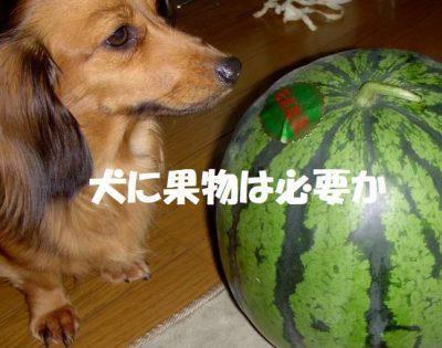 犬に果物は必要か