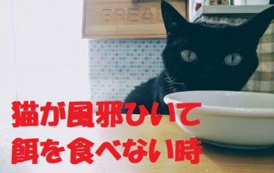 猫が風邪ひいて餌を食べない