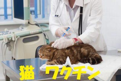 猫のワクチンの必要性