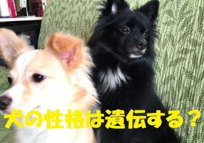 犬の性格は遺伝する?