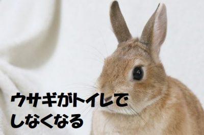 ウサギがトイレでしなくなる