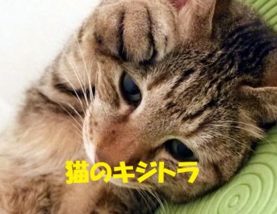猫のキジトラとは