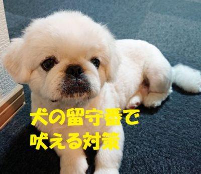 犬の留守番で吠える対策