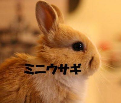 ミニウサギの飼い方