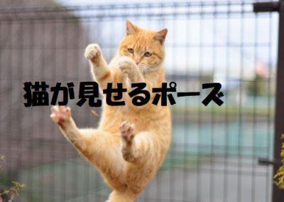 猫が見せるポーズ